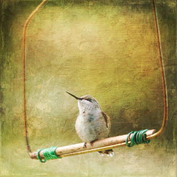 Bird Watching Digital Art - Painted Hummingbird by Heidi Hermes