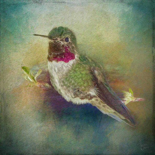 Photograph - Painted Hummingbird by Teresa Wilson