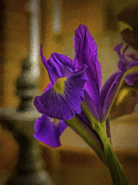 Photograph - Painted Iris by Dave Bosse