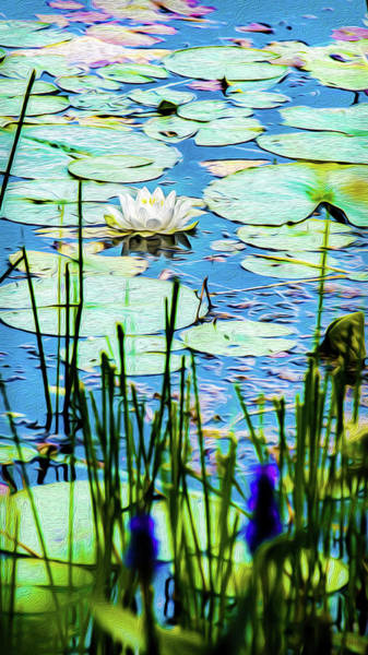 Mixed Media - Painted North American White Water Lily by Onyonet  Photo Studios