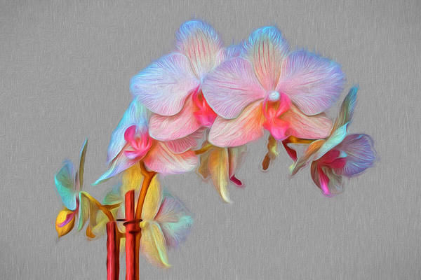Photograph - Painted Orchids by Wes and Dotty Weber