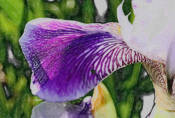 Photograph - Painted Petal by David Matthews