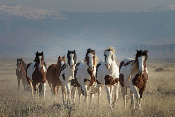 Wall Art - Photograph - Painted Ponies by Sandy Sisti