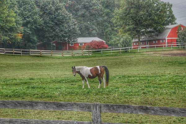 1005 - Painted Pony In Pasture Art Print