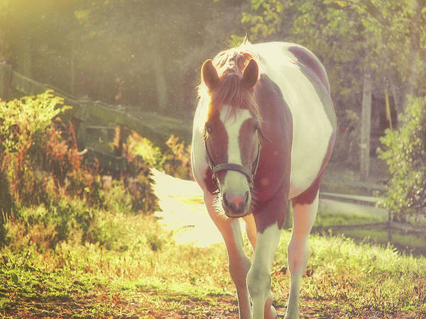 Photograph - Painted Pony by JAMART Photography