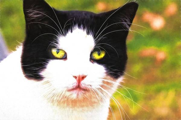 Photograph - Painted Ranch Kitty by Alice Gipson