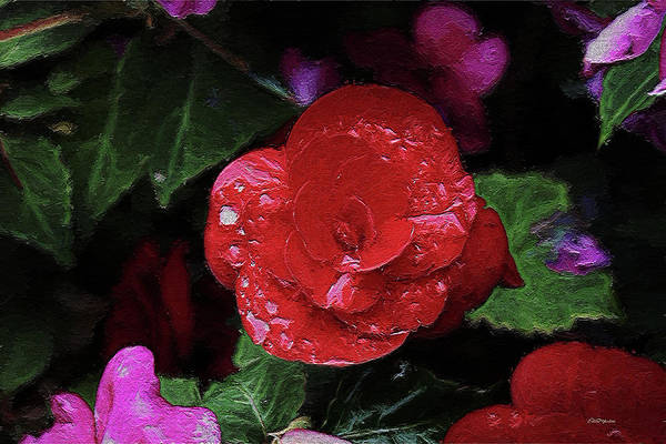 Photograph - Painted Red Begonia 0001 by Ericamaxine Price