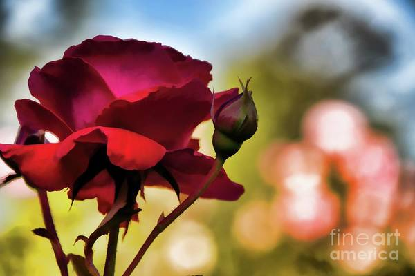 Photograph - Painted Red Rose by Diana Mary Sharpton