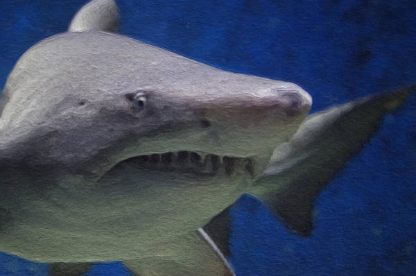 Food Chain Painting - Painted Shark by Jon Bullman