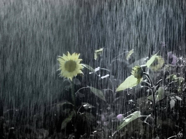 Photograph - Painted Sunflowers In The Rain by Wayne King