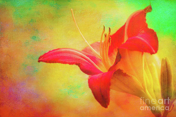 Photograph - Painted Tammas Daylily by Anita Pollak