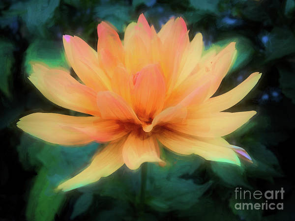 Photograph - Painted Tangerine Dahlia by Anita Pollak