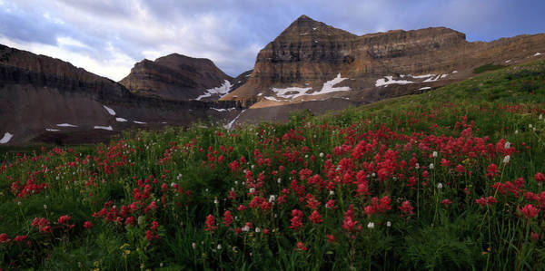 Photograph - Painted Timpanogos by Ryan Smith