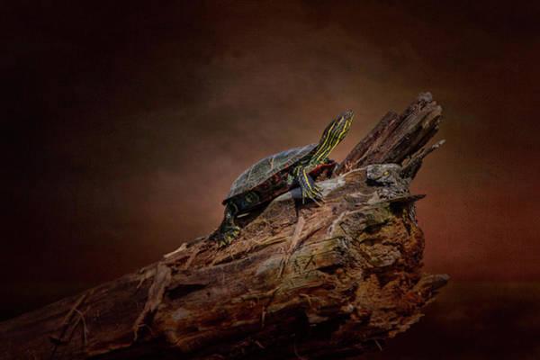 Digital Art - Painted Turtle by Al  Mueller