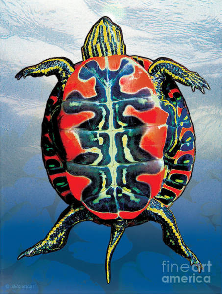 Painting - Painted Turtle Blue by JQ Licensing