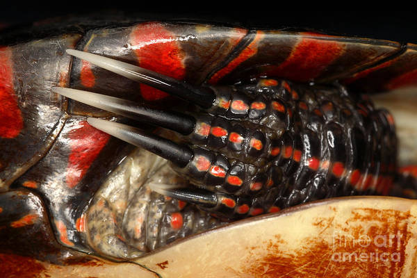 Painted Turtle Photograph - Painted Turtle Claws by Ted Kinsman
