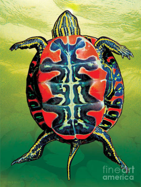 Painting - Painted Turtle Green by JQ Licensing