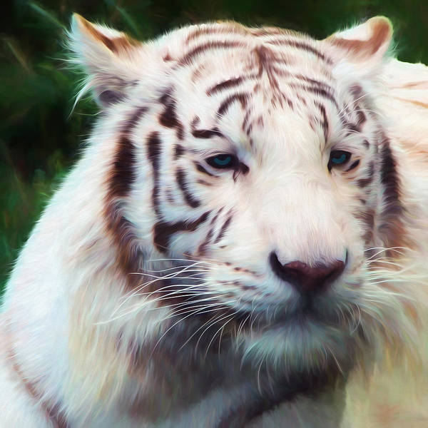 Photograph - Painted White Tiger by Ericamaxine Price