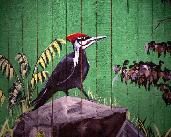 Photograph - Painted Woodpecker On A Baltimore Zoo Fence by Bill Swartwout Photography