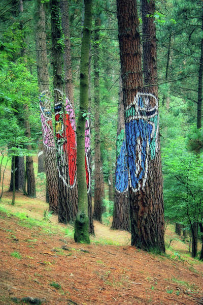 Arte Photograph - Painted Woods by Joan Escala