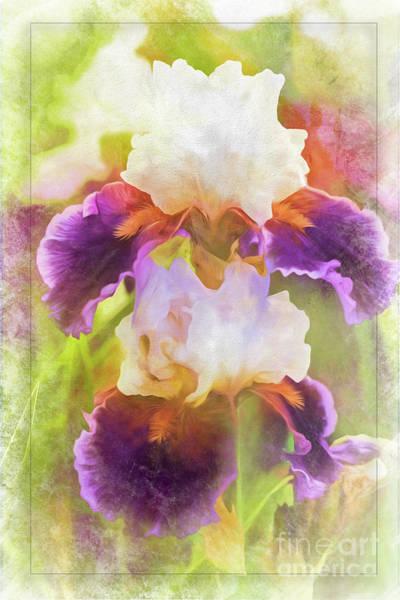Photograph - Painterly Bearded Iris by Eleanor Abramson