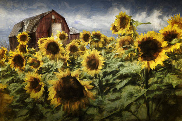 Sunflower Seeds Photograph - Painterly Effects On Golden Blooming Sunflowers With Red Barn by Randall Nyhof