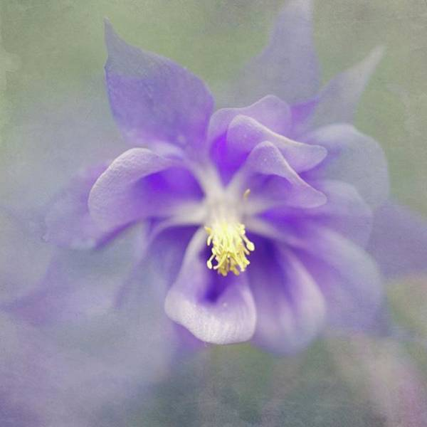 Wall Art - Photograph - Painterly Flowers by Margaret Goodwin