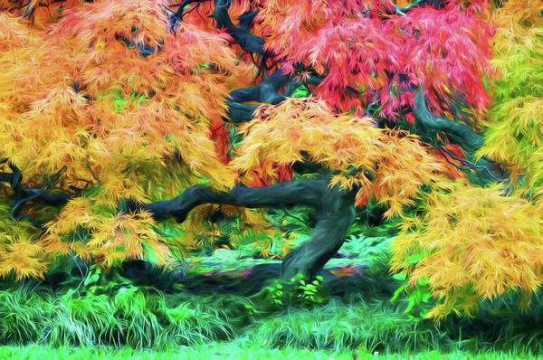 Photograph - Painterly Japanese Maple Tree by Gary Slawsky