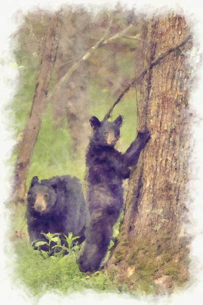 Photograph - Paintography - Mom And Spring Cub In The Woods by Dan Friend