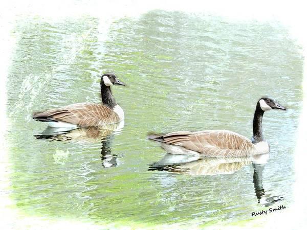 Digital Art - Pair Canada Geese by Rusty R Smith