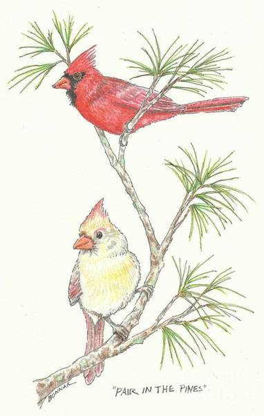 Red Cardinal Drawing - Pair In The Pines by Sue Bonnar