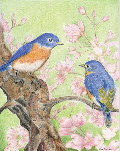 Pair Of Bluebirds Art Print