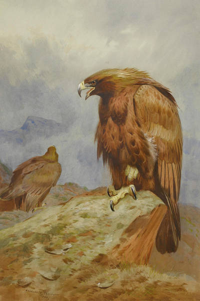 Mixed Media - Pair Of Golden Eagles By Thorburn by Archibald Thorburn