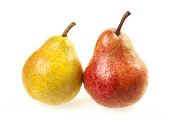 Wall Art - Photograph - Pair Of Pears by Elena Elisseeva