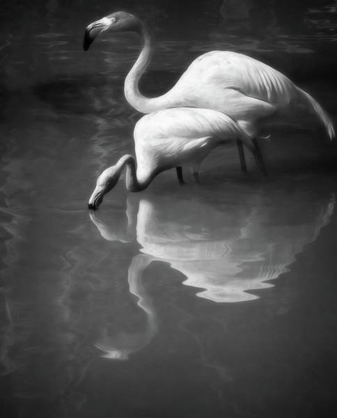Photograph - Paired Black And White by Alice Gipson