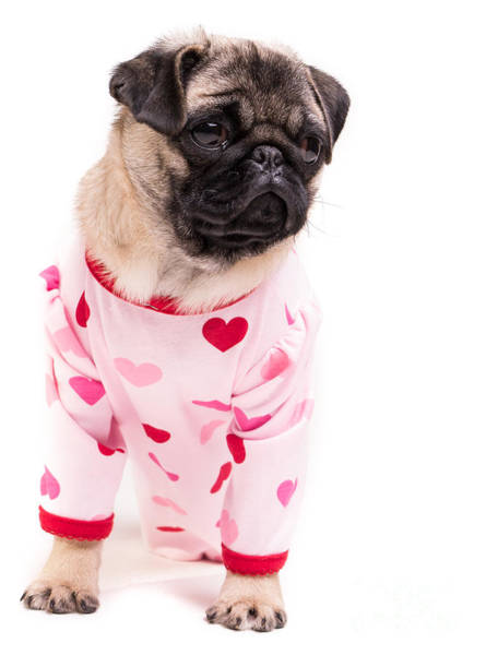 Sweet Puppy Photograph - Pajama Party by Edward Fielding