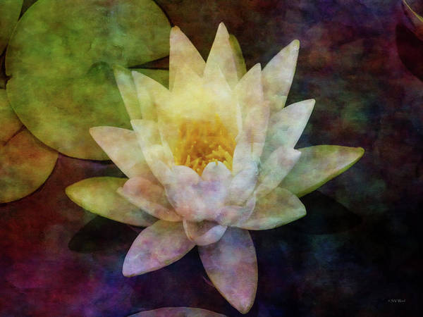 Photograph - Pale Lotus 4151 Idp_2 by Steven Ward
