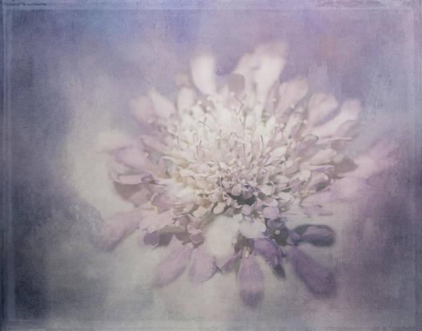 Photograph - Pale Purple by Teresa Wilson