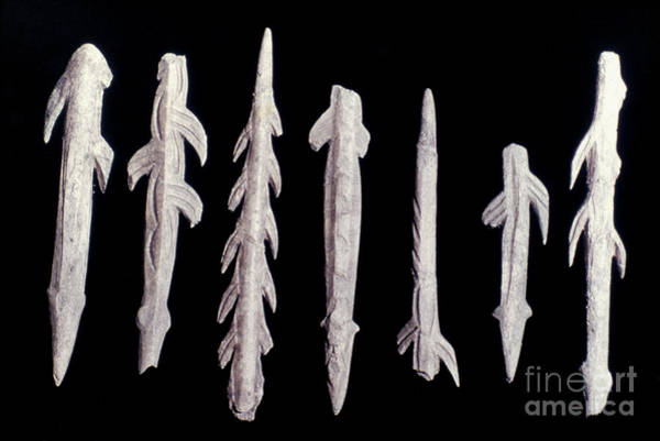 Photograph - Paleolithic Harpoons by Granger