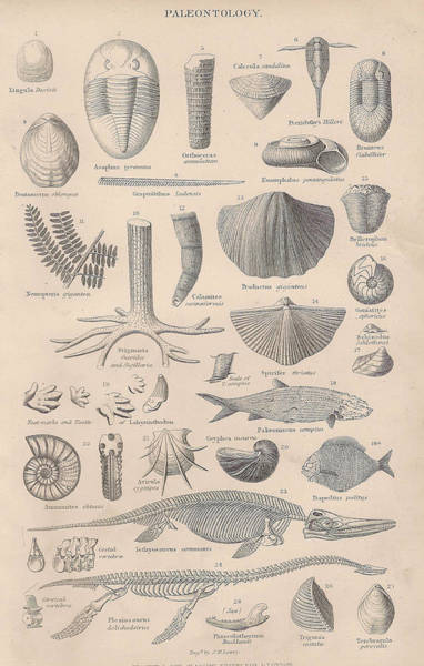 Boho Chic Drawing - Paleontology by Victorian Engraver