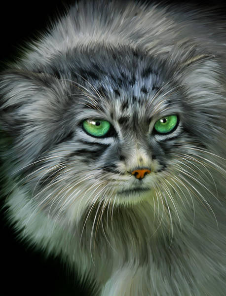Big Cat Digital Art - Pallas Cat by Julie L Hoddinott