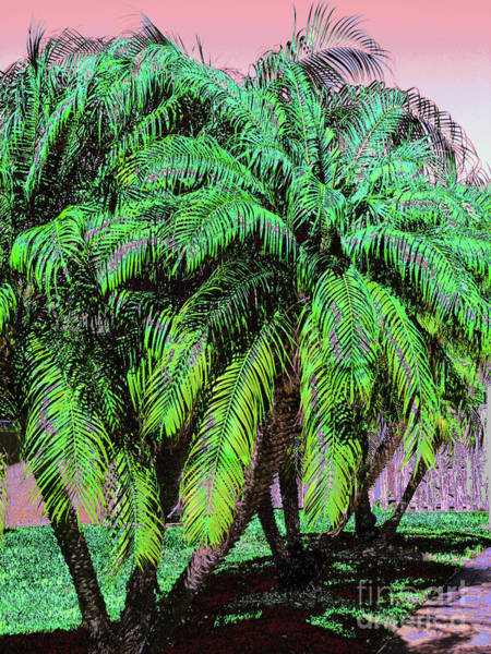 Photograph - Palm 1002 by Corinne Carroll