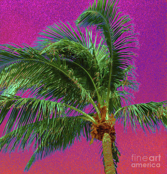 Palm 1012 Art Print
