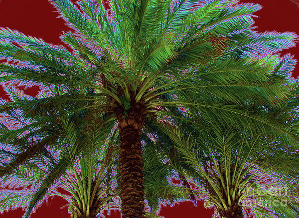 Photograph - Palm 1013 by Corinne Carroll