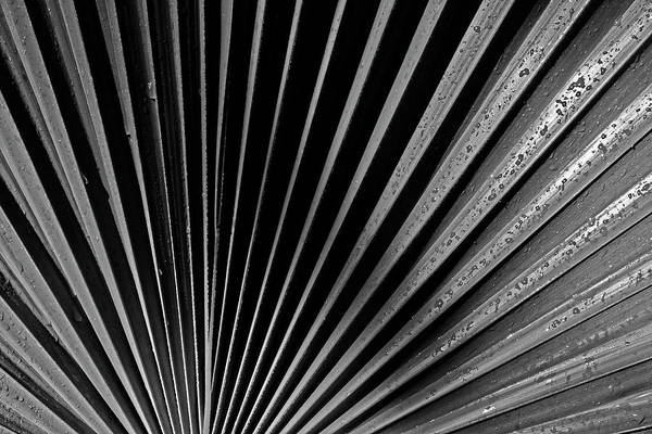 Photograph - Palm Abstract by Bob Decker