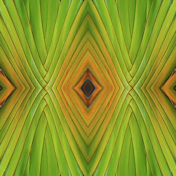 Photograph - Palm Abstract Iv by Michelle Constantine