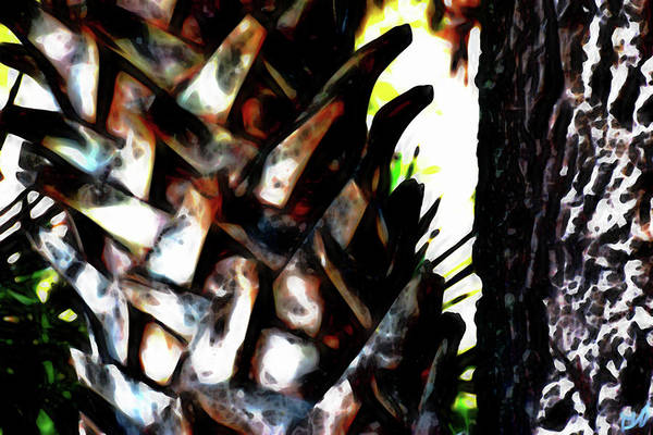 Photograph - Palm And Oak Trunks by Gina O'Brien
