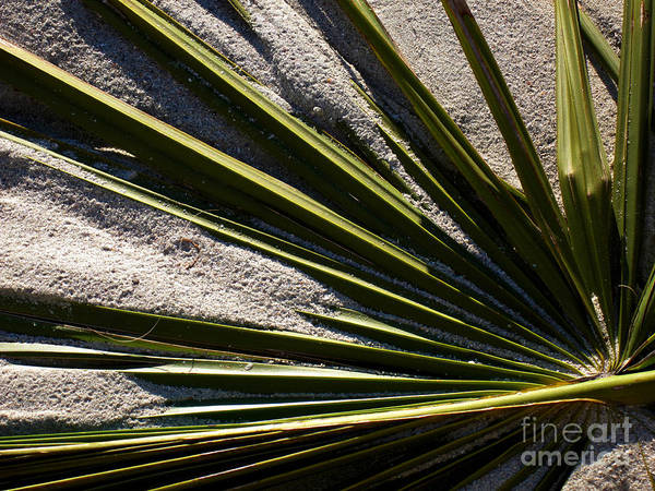 Photograph - Palm And Sand by Susanne Van Hulst