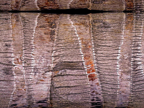 Photograph - Palm Bark Tribal 16 by Lynda Lehmann