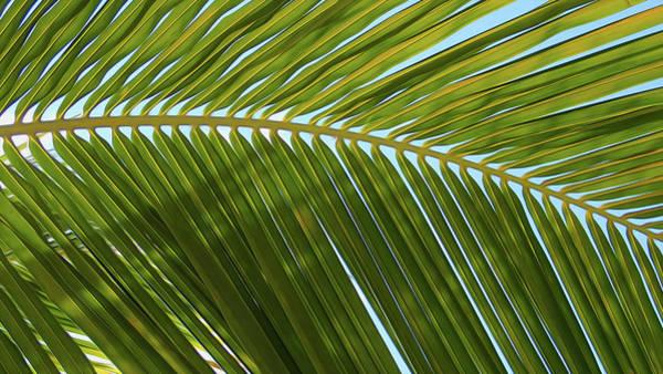 Belize Digital Art - Palm Branch Smooth by Geoff Strehlow